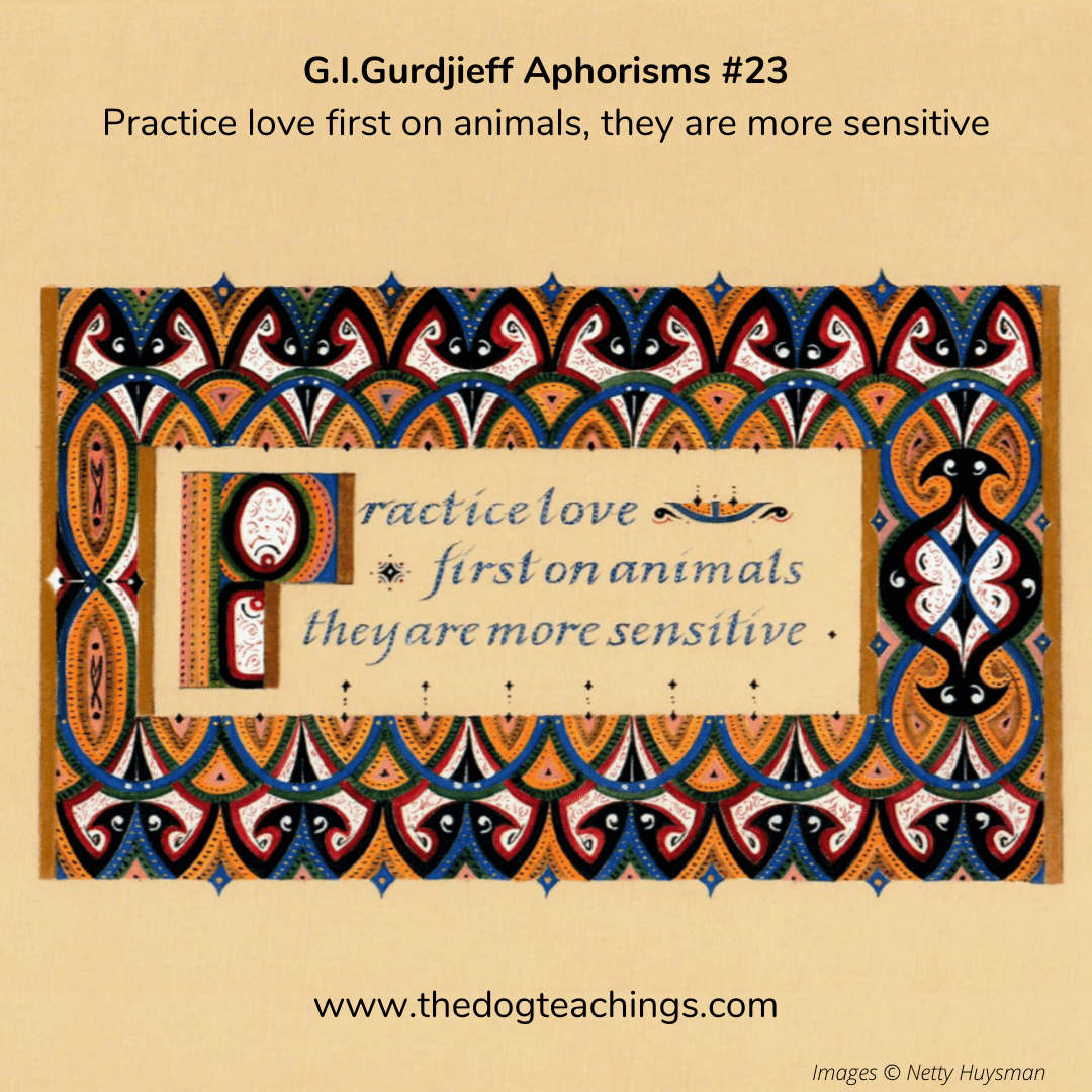 Gurdjieff Aphorism #23 - Practice love first on animals, they are more sensitive.